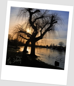 Willows Walk in the Thames at Walton