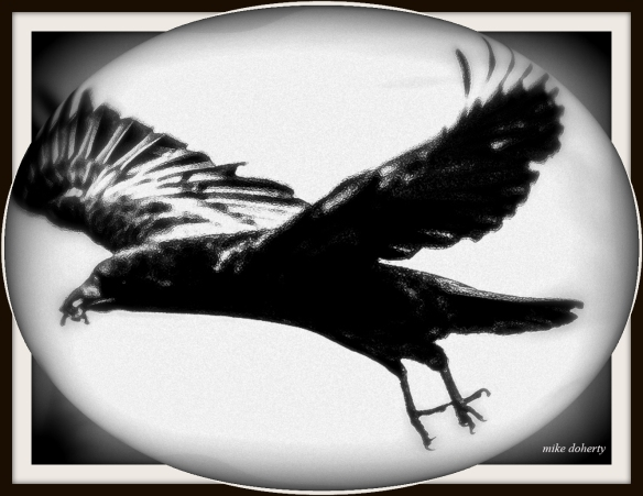 Crow. Pic for poem