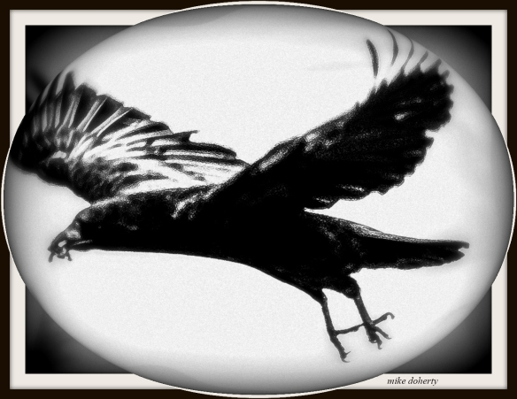 variation on a crow. pic